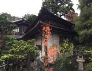 utunomiya20151210_1